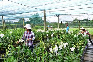 TP.Hồ Chí Minh đẩy mạnh phát triển nông nghiệp đô thị hiện đại, hiệu quả, bền vững