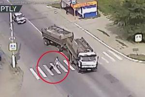 Chú chó giật dây cứu sống bà chủ ngay trước đầu xe tải