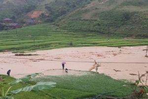 Sơn La: Mưa lũ làm cầu sập, bò trôi, dân di dời khẩn cấp