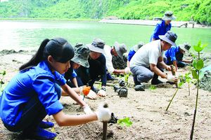 Ứng phó biến đổi khí hậu: Giải quyết thách thức để phát triển bền vững