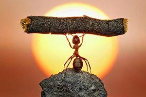 Gánh nặng trên lưng không bằng gánh nặng trong lòng, làm người nâng lên được thì cũng đặt xuống được