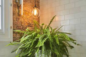 Những loại cây cảnh giúp hút sạch sóng và bức xạ trong nhà mà bạn nên trồng