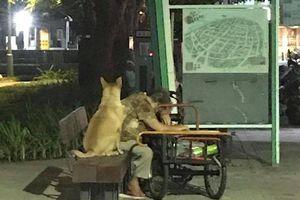 Chú chó không màng đi chơi, kiên nhẫn ngồi bên chủ khi bà mệt mỏi khiến người xem cảm động