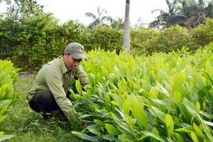Đắk Nông: Tiến độ trồng rừng vẫn còn chậm so với kế hoạch năm 2018