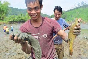 Quảng Nam: Cả làng hò nhau đi bắt cá đồng, vui như hội