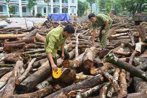 Xã Long Sơn (Hòa Bình): Trưởng thôn phá rừng