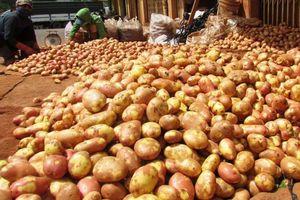 Cấm cửa nông sản Trung Quốc 'đội lốt' hàng Việt tuồn vào Đà Lạt