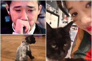 Sau khi cạo trụi lông mèo cưng 3.000 USD, Hari Won quay clip khoe 'nó ok lắm' dù Trấn Thành uất ức khóc không ra tiếng
