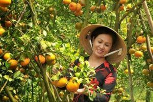 Vườn sum xuê trái, sao du lịch nông nghiệp vẫn 'ngái ngủ'?