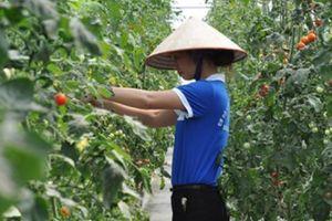 Nông dân Quảng Ninh bắt nhịp với sự phát triển năng động của tỉnh