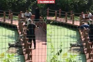 Clip du khách Trung Quốc đá liên tiếp vào lưng cá sấu tại sở thú khiến dân mạng bức xúc