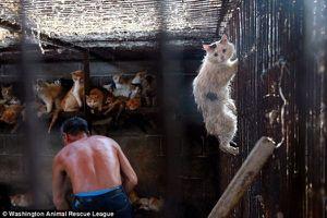 Hành vi giết thịt chó, mèo trên thế giới: Bị ngồi tù, phạt tiền hàng trăm triệu đồng