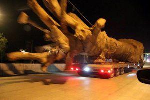 Truy vi phạm DN sở hữu xe đầu kéo chở 'quái thú' trên QL1A
