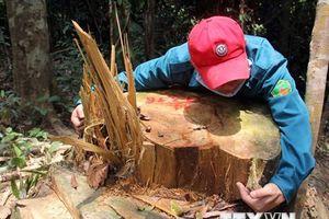 Nhiều vụ phá rừng phòng hộ đặc biệt nghiêm trọng