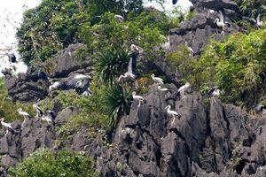 Cận cảnh khu sinh thái vườn chim Thung Nham chăn nuôi lợn giữa Tràng An