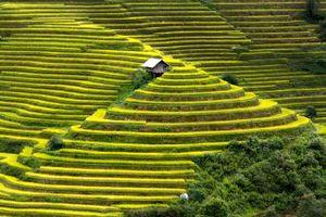Rạo rực trước vẻ đẹp của những cánh đồng ruộng bậc thang ở Mù Cang Chải