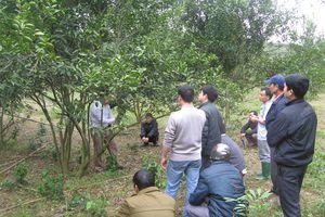 Hà Giang: Nâng cao hiệu quả dạy nghề, giải quyết việc làm cho lao động nông thôn