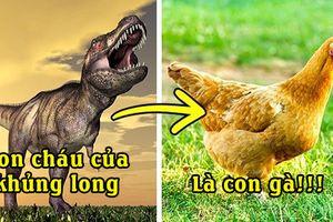 14 điều tưởng đùa nhưng hóa ra là sự thật khiến bạn 'ngã ngửa', ai cũng từng ăn thịt khủng long