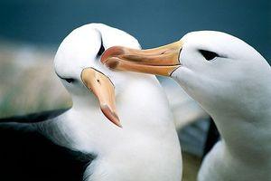 Những động vật chung thủy nhất thế giới