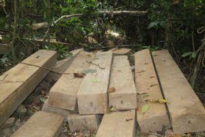 Lâm tặc dựng trại để 'tiện' đốn hạ cây rừng
