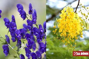 7 loài hoa ở Việt Nam đẹp mê ly nhưng lỡ ăn phải sẽ trúng độc trong nháy mắt