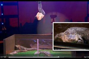 Màn trình diễn rùng rợn với bầy cá sấu của thí sinh America's Got Talent