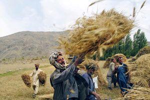 Hạn hán là nguyên nhân chính khiến người Afganishtan tha hương