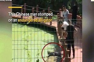 Thêm trò nghịch dại của du khách TQ: Thò chân qua rào đạp cá sấu