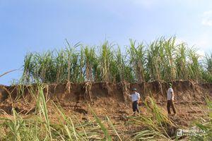 Sau lũ, sạt lở hàng chục ha đất sản xuất bãi bồi ven sông Lam