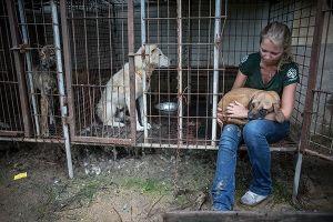 Nóng nhất hôm nay: Hạ viện Mỹ thông qua dự luật cấm ăn thịt chó mèo