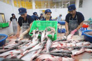 Cá tra và basa Việt Nam được Hoa Kỳ giảm thuế chống bán phá giá
