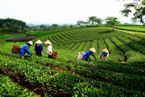 Thái Nguyên: Huy động trên 23,6 nghìn tỷ đồng xây dựng nông thôn mới