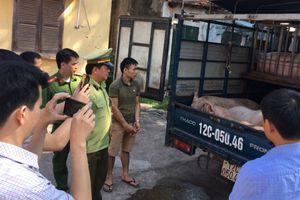 Cảnh báo nguy cơ dịch tả lợn châu Phi có thể lan sang Việt Nam