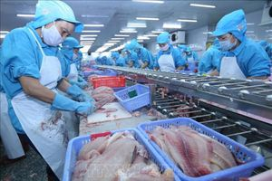 Hoa Kỳ giảm thuế chống bán phá giá cá tra và basa của Việt Nam