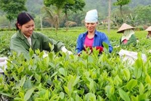 Thái Nguyên đẩy mạnh cơ cấu lại nông nghiệp
