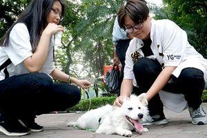 Clip: Chó không rọ mõm vẫn tung tăng ở phố đi bộ, chủ chó nói gì?