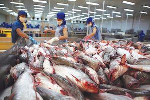 Mỹ giảm thuế chống bán phá giá cá tra Việt Nam