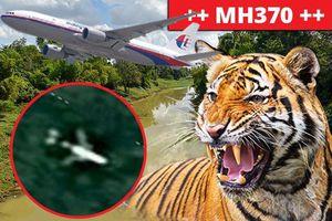 Hổ dữ chặn đường nhóm tìm kiếm MH370