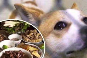 Tại sao lại ăn thịt loài vật trung thành?