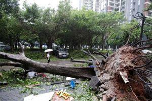 Trung Quốc đại lục 'chật vật' chống siêu bão Mangkhut, 4 người chết