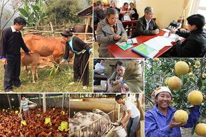 Các loại phí được miễn theo chính sách tín dụng phục vụ phát triển nông nghiệp, nông thôn