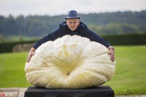 Những siêu rau củ khổng lồ khiến ai cũng choáng váng