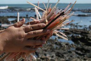 Cuộc chiến biển và nhựa
