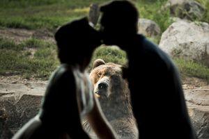 Cười 'ngả nghiêng' với chú gấu sáng chiếm trọn tâm điểm của cô dâu chú rể