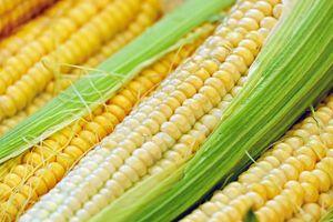 Thực phẩm biến đổi gen có an toàn cho sức khỏe?