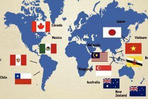 Nhật, Chile quyết tâm sớm thực thi CPTPP