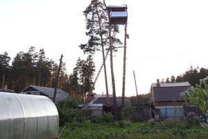 Đàn ông quái gở lén dựng nhà cao chót vót trên 2 cây thông để trả đũa hàng xóm