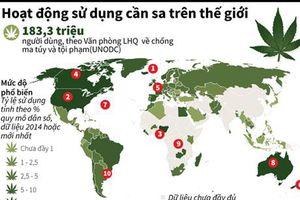 Hoạt động sử dụng cần sa trên toàn thế giới
