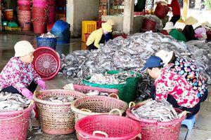 Bà Rịa – Vũng Tàu: Nhiều chuyển biến tích cực của ngư dân trong đánh bắt thủy hải sản