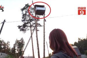 Xây nhà trên ngọn cây nhà hàng xóm để trả thù